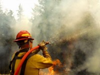 Firefighters, Wildland